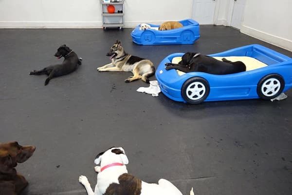 Dogs in the playroom