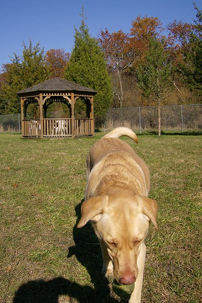Dog playing in the dog park