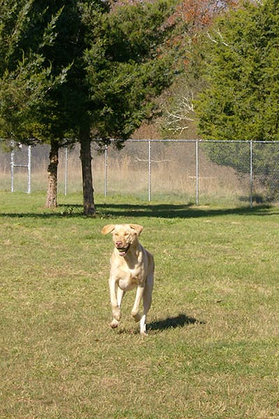 Dog running in the dog park